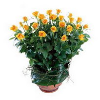 Eryaman çiçek satışı anneler günü çiçek yolla  10 adet sari gül tanzim cam yada mika vazoda çiçek