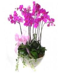 9 dal orkide saksı çiçeği  Ankara Eryaman çiçek siparişi vermek