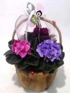 Sepet içerisinde 3 adet menekşe  Çiçek yolla Eryaman 14 şubat sevgililer günü çiçek
