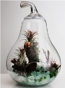 Orta boy Armut 6 adet kaktüs terrarium  Ankara Eryaman çiçek satışı çiçek siparişi