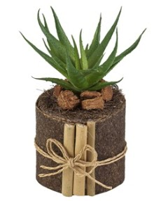 Doğal kütük içerisinde 1 adet kaktüs  Ankara Eryaman çiçek yolla