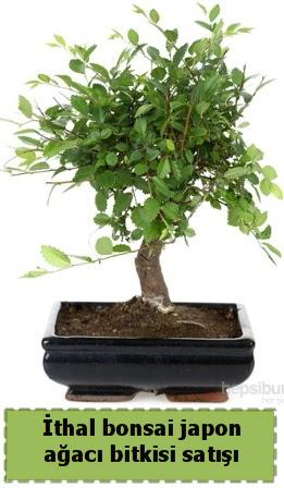 İthal bonsai saksı çiçeği Japon ağacı satışı  Eryaman çiçek yolla , çiçek gönder , çiçekçi
