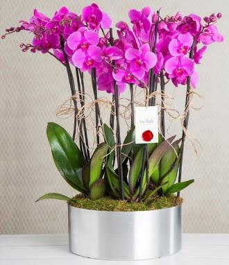 11 dallı mor orkide metal vazoda  Ankara Eryaman yurtiçi ve yurtdışı çiçek siparişi