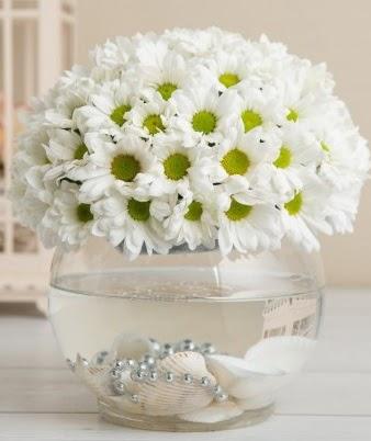 Fanusta beyaz Papatya  Eryaman çiçek gönderme sitemiz güvenlidir