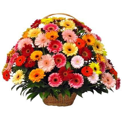 Karışık renkli büyük gerbera sepet aranjmanı  Ankara Eryaman yurtiçi ve yurtdışı çiçek siparişi